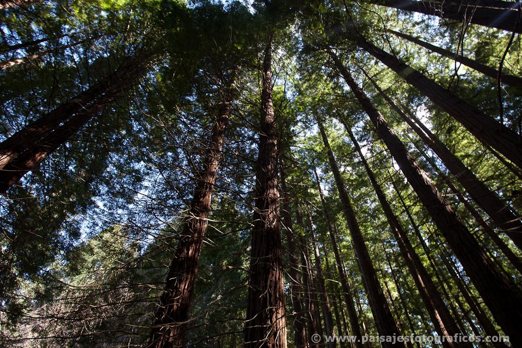 Monumento Natural de las Sequoias del Monte Cabezón