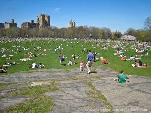 Sheep Meadows - Central Park